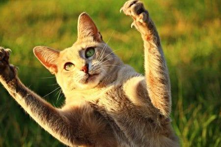 What Is Cat Scratch Disease?