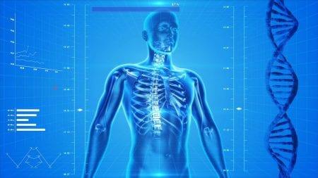 Organ Health Depend on Spinal Nerves
